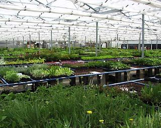 Bluestone Perennials In My Hometown Of Madison Is The Giant Among These Nurseries Shipping More Than 3 Million Plants A Year Has Ability